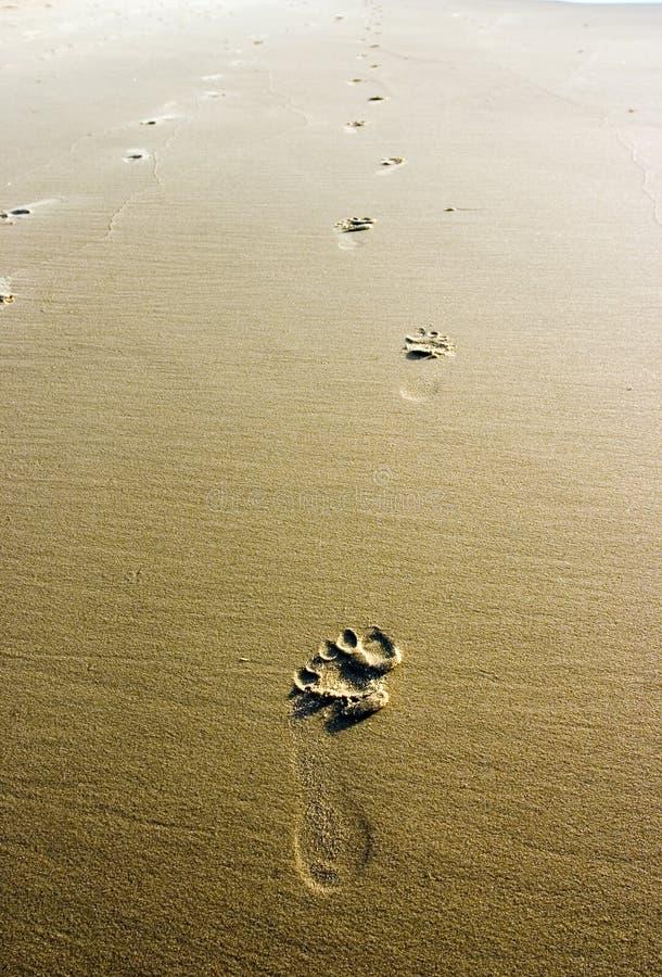 Footprints on the beach. Shot at Noosa beach, Australia stock image