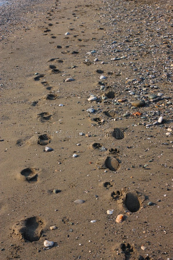Download Footprints on the Beach stock image. Image of pebbles - 5979007