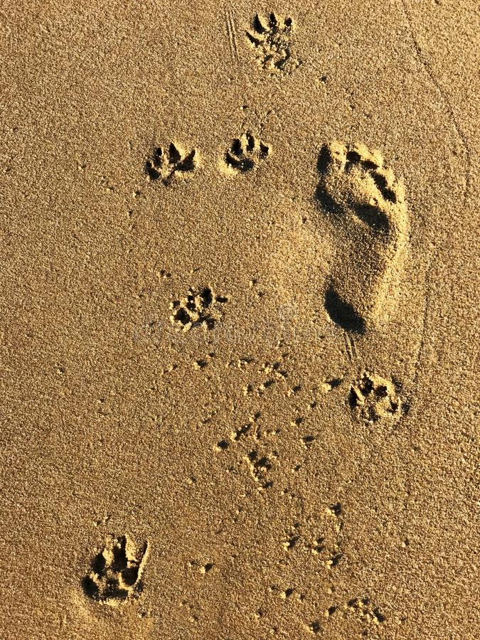 Footprints on a beach royalty free stock photography