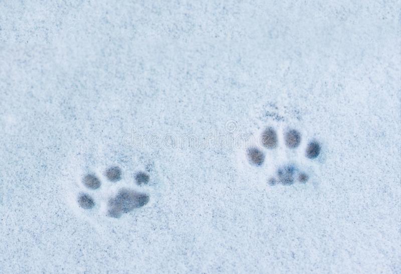 Footprints cat in the snow. The footprints cat in the snow stock photography