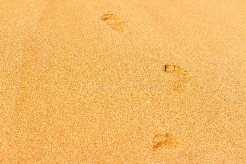 Footprints from children`s feet in the clear sea sand stock photo