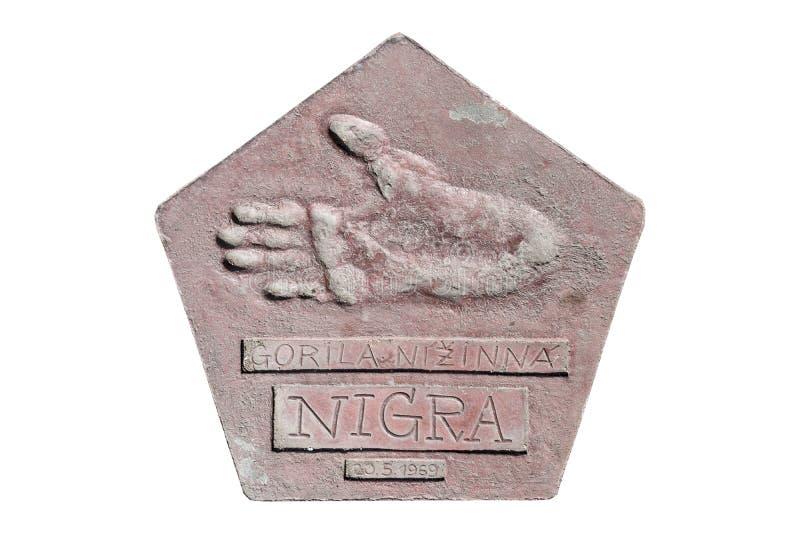 Footprints of a gorilla named Nigra stock photos
