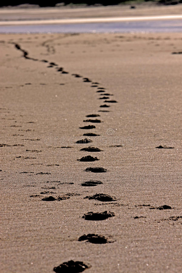 Free Footprints In Sand Royalty Free Stock Photo - 44027825