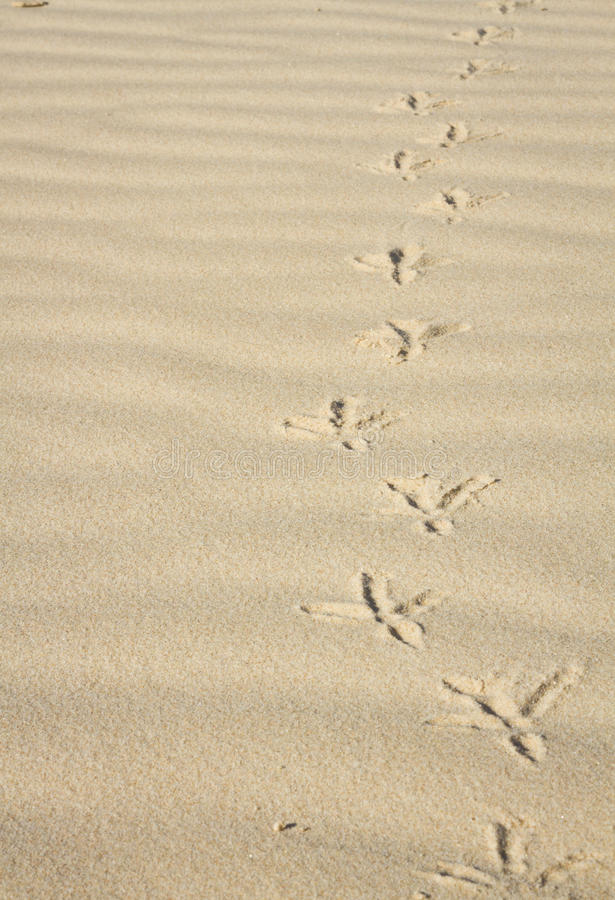 Free Footprints In The Sand Of A Bird Royalty Free Stock Photography - 34507247