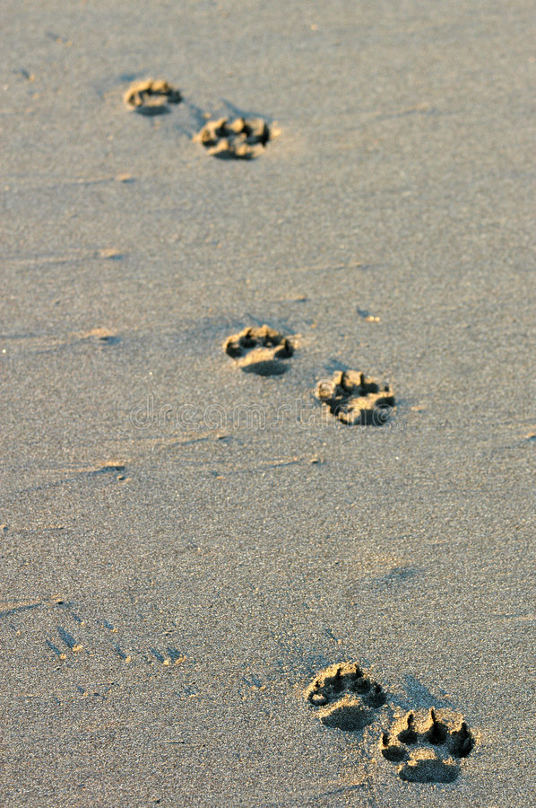Footprints, Mexico royalty free stock images