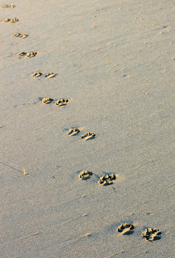 Footprints, Mexico royalty free stock image