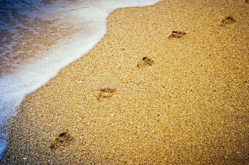 Download Footprints in the sand stock photo. Image of inspiration - 23058908