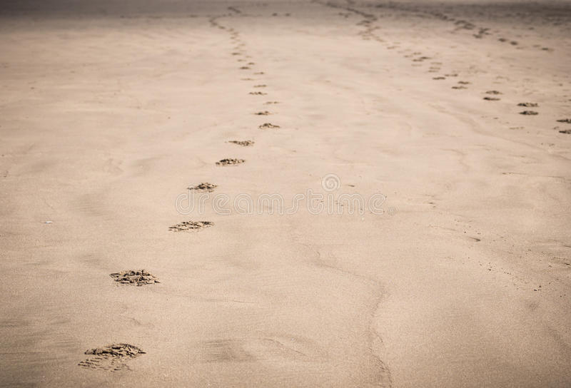 Download Footprints In Sand On Beach Royalty Free Stock Photography - Image: 32819337