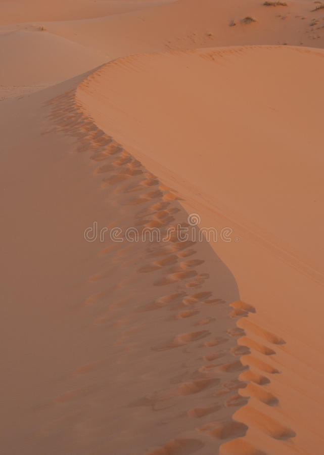 Download Footprints on sand desert stock photo. Image of sunrise - 26717706
