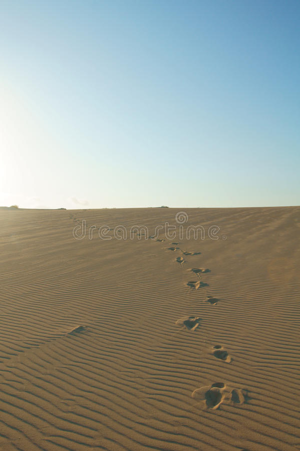 Footprints in sand dunes royalty free stock photography