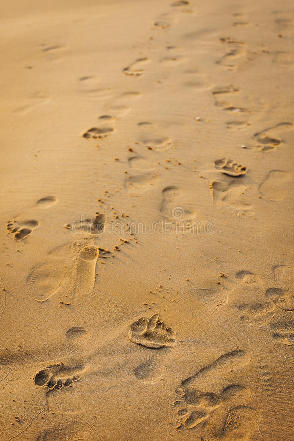 Footprints in the sand. Many footsteps on the beach on the sunset. Golden sand full of different foot marks. Micro shadows texture. Shape of the foots in the royalty free stock image