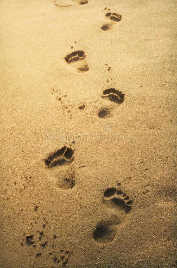 Footprints in the sand. At sunset stock images