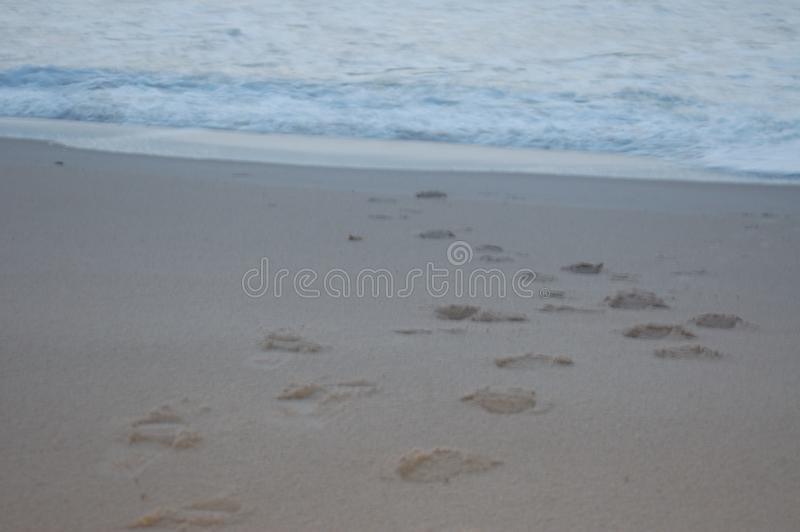Footprints in the sand toward the sea. A beach early in the morning just before sunrise. The sky is a medium blue with a hint of white. The ocean waves are low stock photography