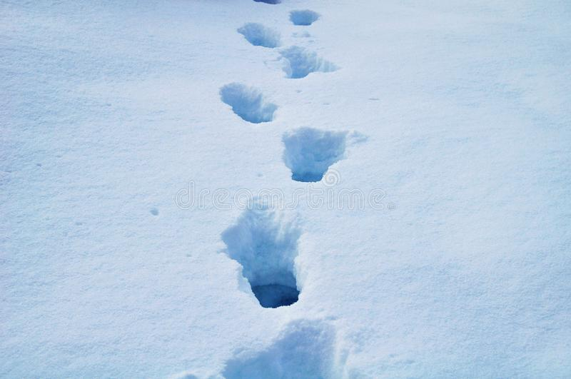 Download Footprints in the snow stock photo. Image of footprints - 22062420