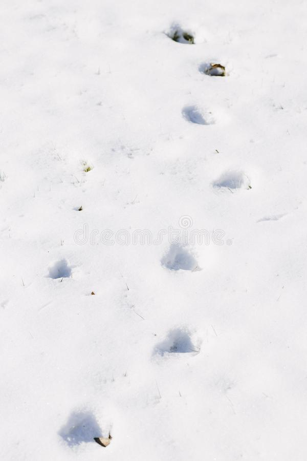 Download Footprints In The Snow Background Stock Image - Image of landscape, hill: 107527445