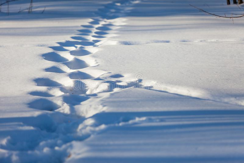 Footprints in the snow in March, lit by the rays of the setting sun.  stock image