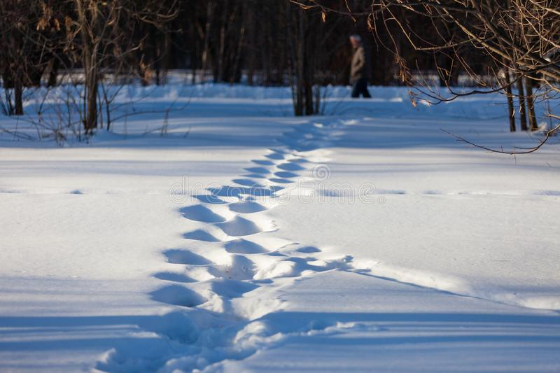 Footprints in the snow in March, lit by the rays of the setting sun. Blurred man silhouette behind.  royalty free stock images