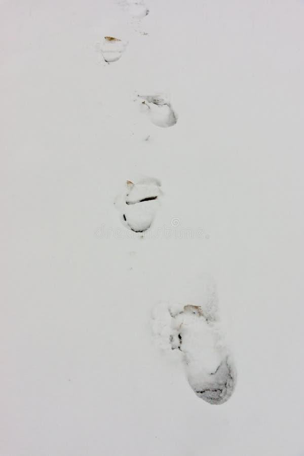 Footprints in the snow in Pomorie, Bulgaria in January stock image