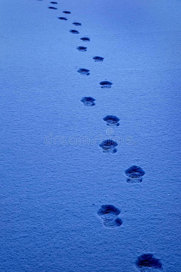 Footprints in the Snow Show a Path for Progress stock photo