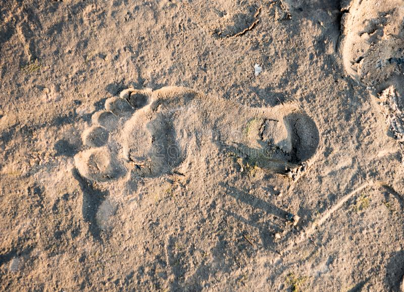 Footstep on sand on the beach stock images