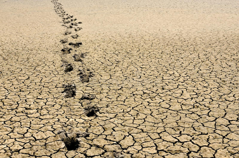 Download Footsteps in arid land stock image. Image of track, drought - 20999509