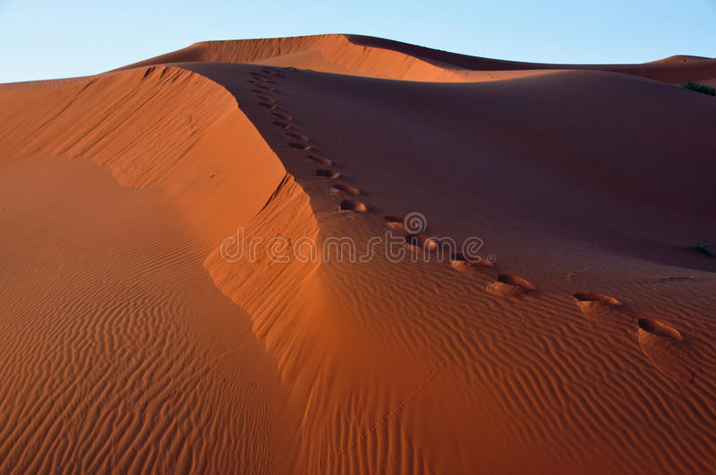 Footsteps on dunes in the desert of Morocco royalty free stock images