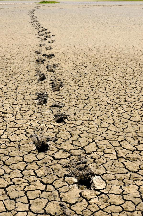 Free Footsteps In Arid Land Stock Images - 20999554