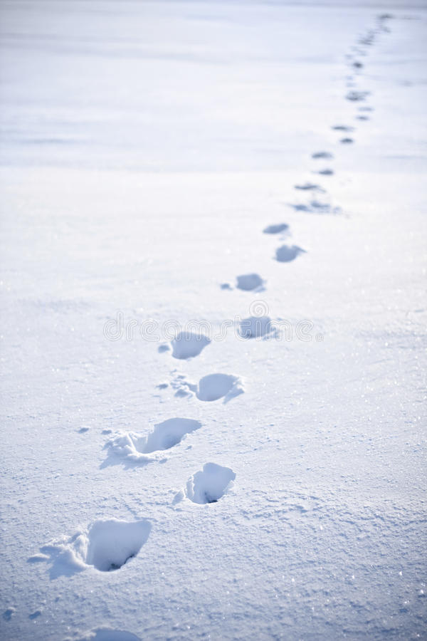 Free Footsteps In The Snow Royalty Free Stock Photo - 10419915