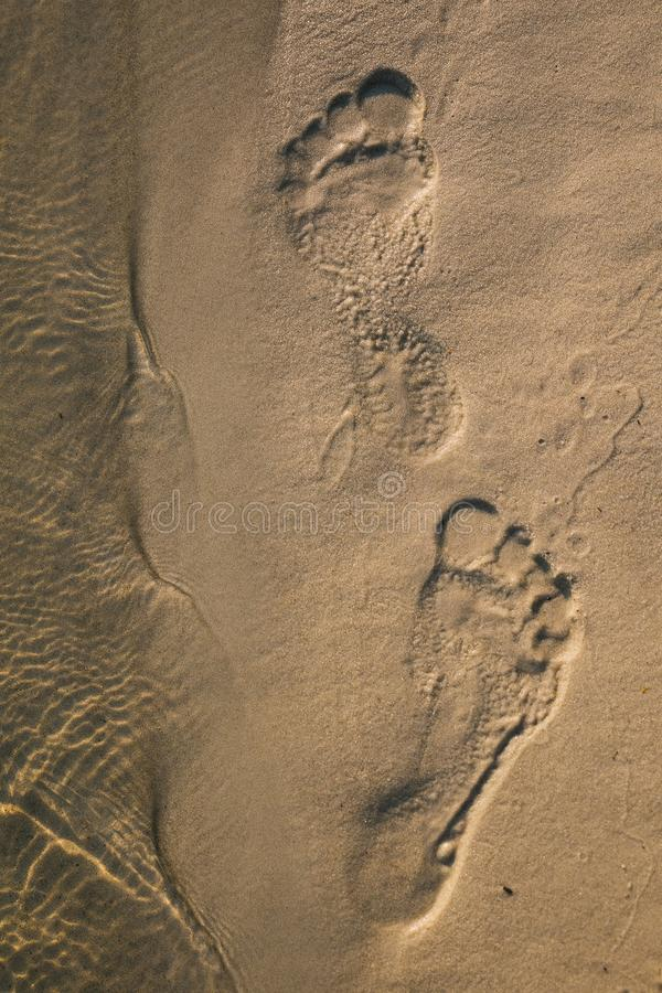 Footsteps in sandy on the beach royalty free stock images