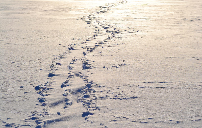 Download Footsteps on the snow stock photo. Image of nature, scenery - 21568896