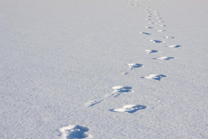 Download Footsteps In Snow Royalty Free Stock Photography - Image: 7631657