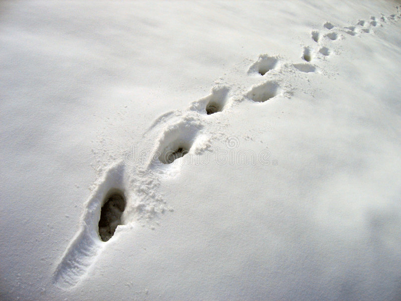 Footsteps in snow stock photos