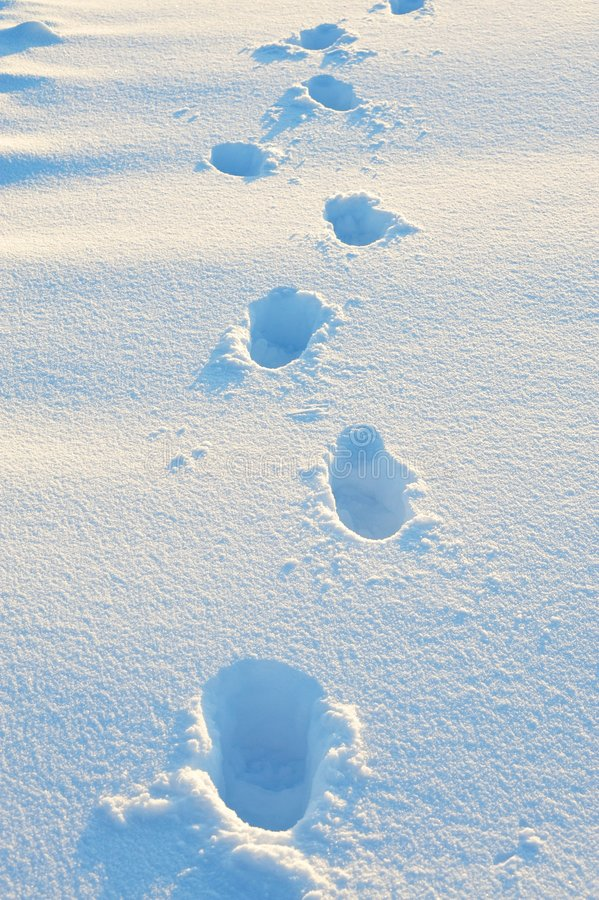 Footsteps in snow field royalty free stock image