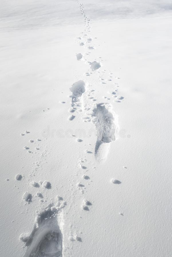 Footsteps in snow. Foot pathway through the snow. Winter scenery stock photos