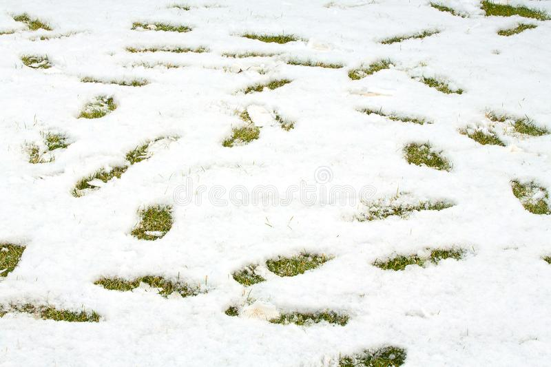 Footsteps in snow on green yellow grass. Ground covered with fresh snow and a print of human footsteps. Snow texture. White winter wallpaper stock image