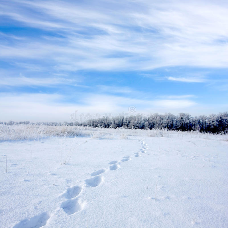 Download Footsteps On Snowbound Meadow Stock Image - Image: 9648159