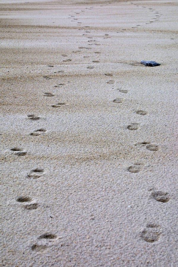 Download Footstpes na areia foto de stock. Imagem de etapas, trajeto - 536246