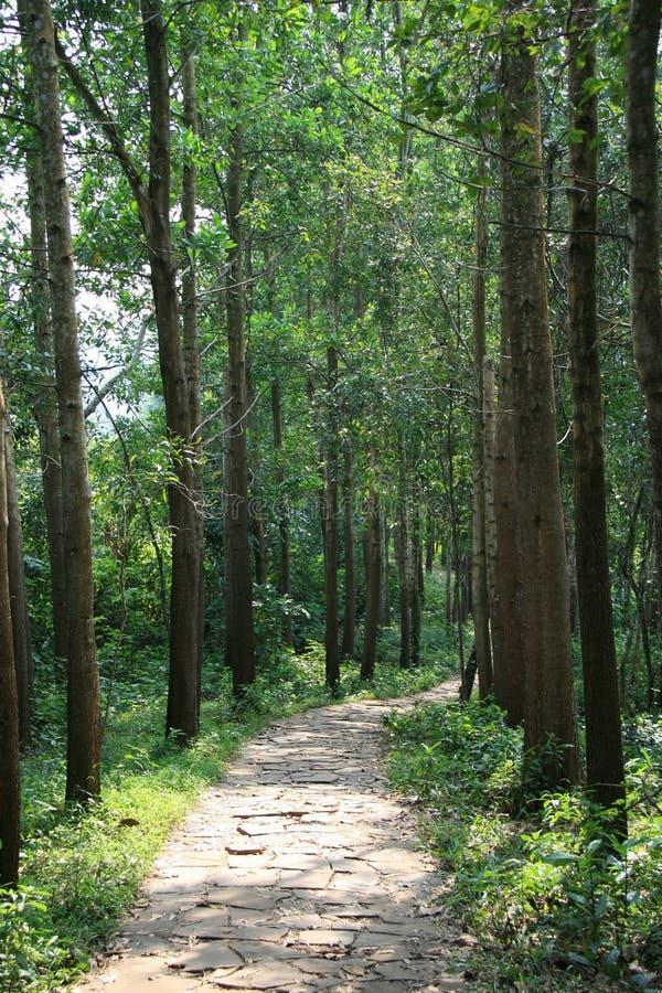 Forêt Vietname do une dos dans do pavée do allée de Une imagem de stock royalty free