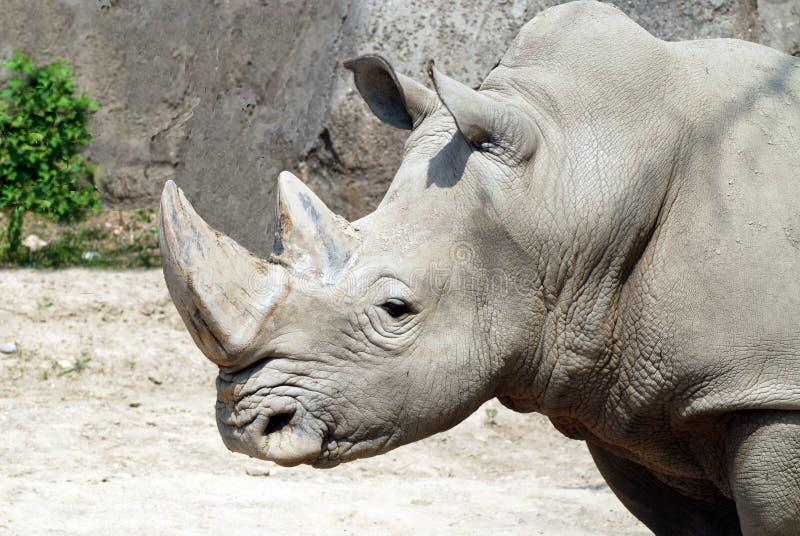 Força do rinoceronte imagens de stock royalty free