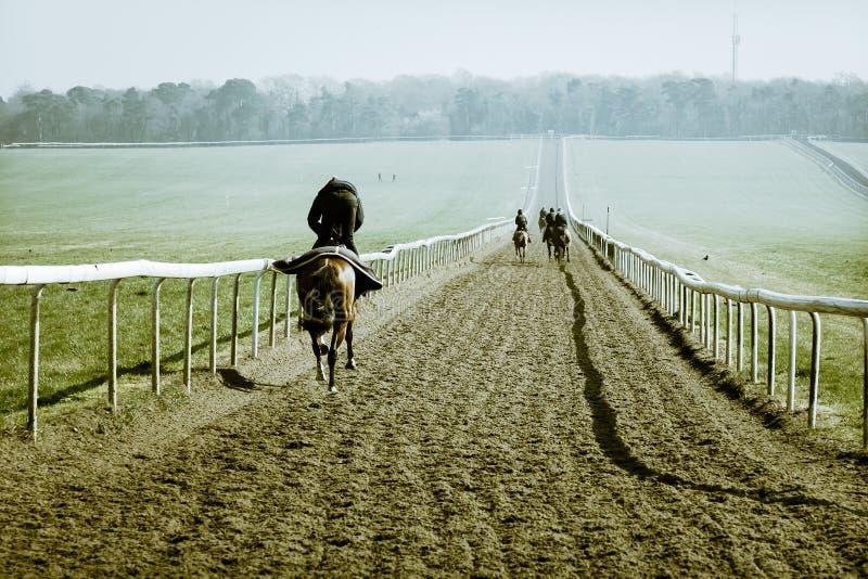 Força & vigor do treinamento do cavalo de corrida fotos de stock royalty free