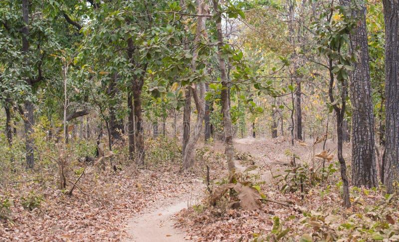 Forêt à feuilles caduques moite photographie stock