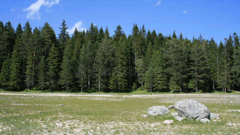 Forêt à l'été image stock