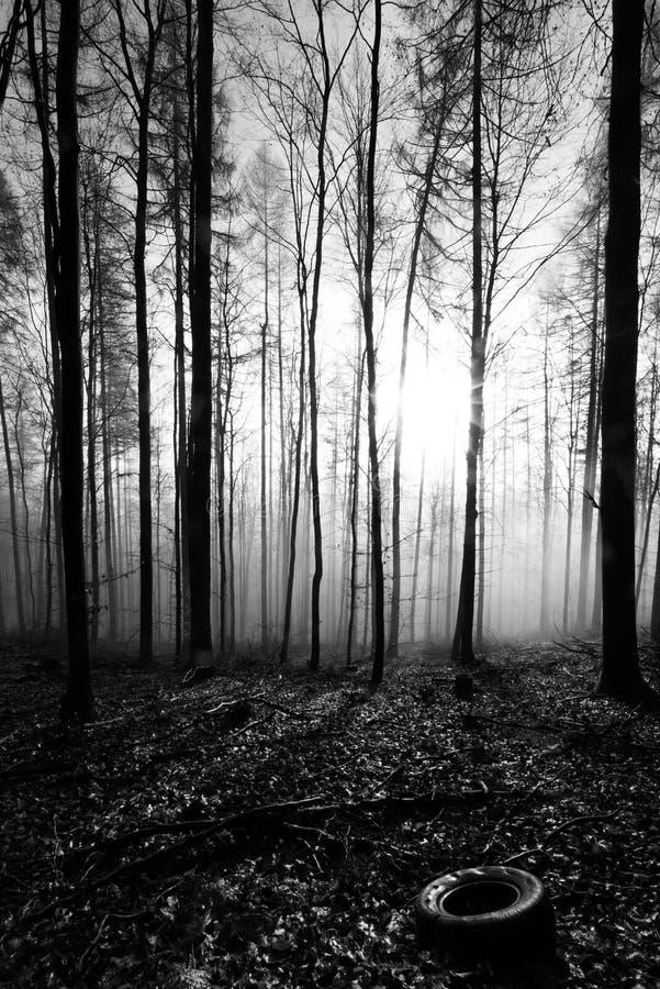 Forêt à l'aube, noire et blanche images stock