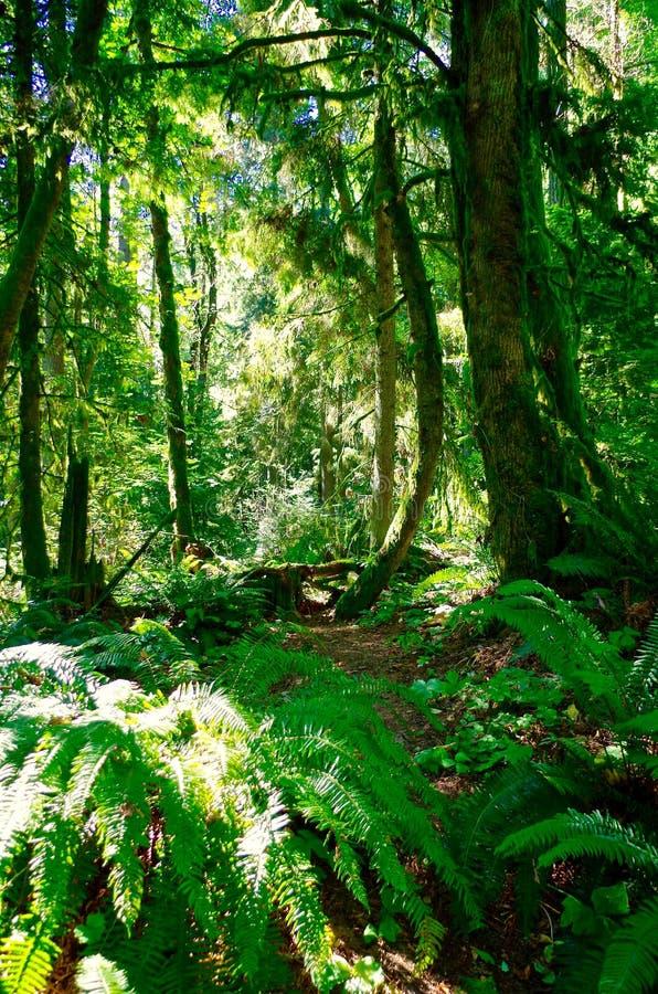 Forêt à Portland Orégon images stock