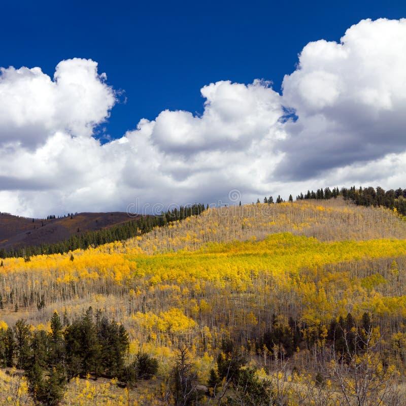 Forêt énorme d'automne en montagnes du Colorado photographie stock libre de droits