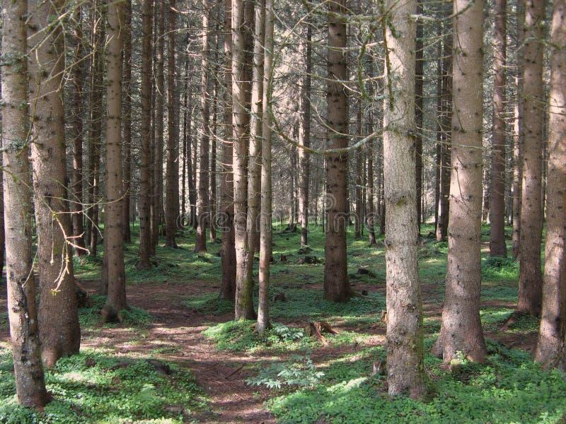 Forêt épaisse image stock