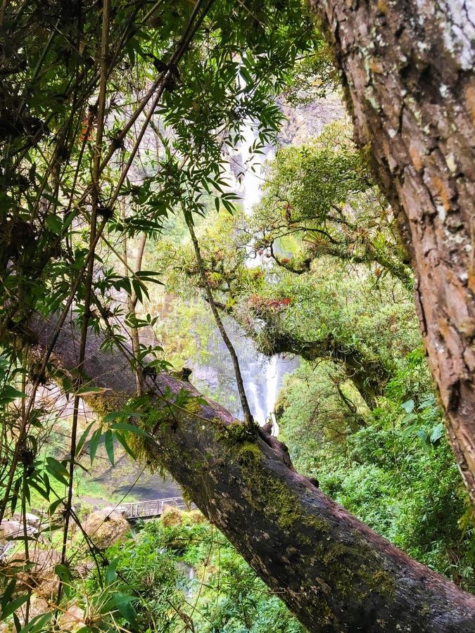 Forêt équatorienne luxuriante dans Giron photographie stock