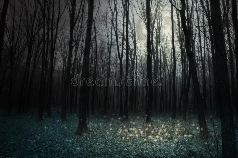 Forêt photo stock