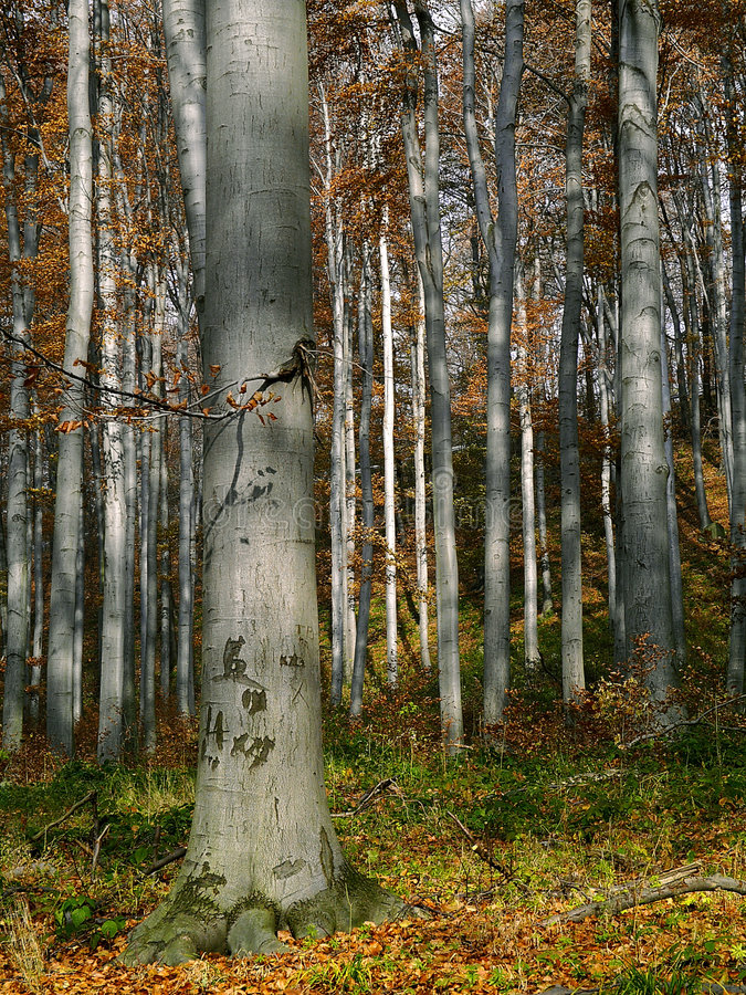 Download Forêt photo stock. Image du outdoors - 2148372