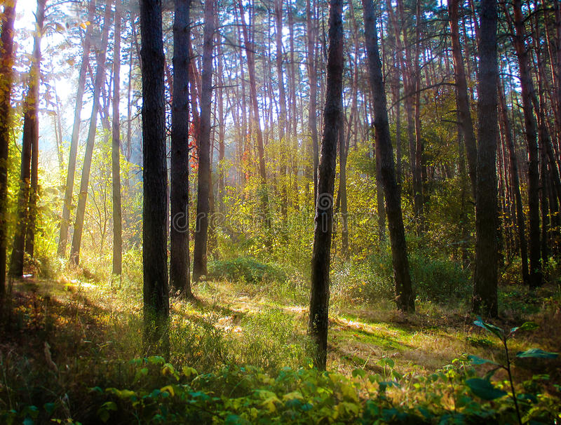 Forêt photos stock